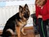 kucharz-i-jego-pies16