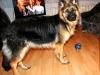 kucharz-i-jego-pies24