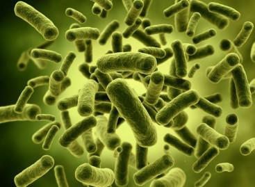 Bakterie czepiają się zabawek