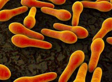 Potencjalnie niebezpieczne zakażenie bakteryjne