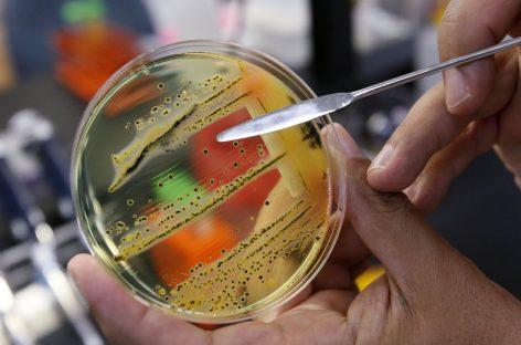 12 bakterii, które stanowią największe zagrożenie dla zdrowia ludzkiego