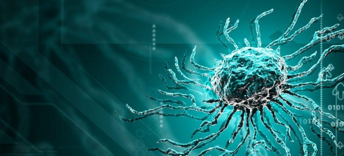 Odkrycie dwóch komórek macierzystych