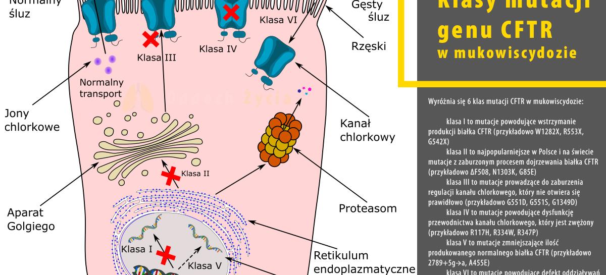 Nowa tablica przedstawiająca klasy mutacji genetycznych CFTR w mukowiscydozie.